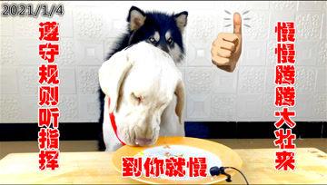 主人分开喂食狗狗,狗狗自己居然自己排上了队?-《大壮和朵拉》
