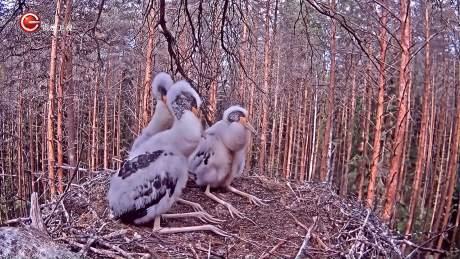 走进自然:毛孩子待在巢里,等待父母捕猎归来,不时还相互打气-《贵州台走进自然》
