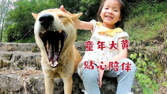 留守儿童的幸福童年,放学回家跟大黄玩耍,聊天可真是妙语连珠啊-《田园犬巡游记》