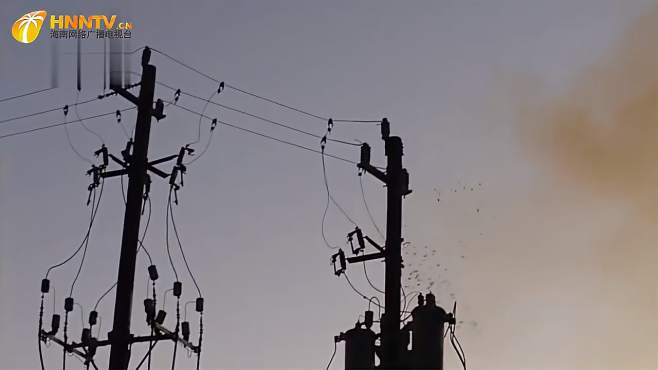 鸟群停留在电线杆上,电线瞬间爆炸,镜头拍下精彩一幕-《潮观大自然》