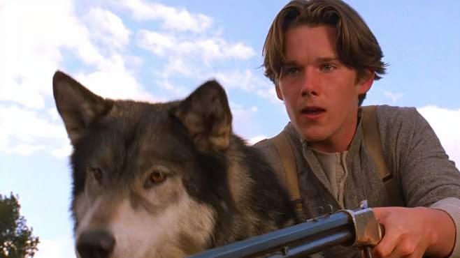 这是我见过最惨的狼,为了一口吃的,竟沦落为拉货工具-《午夜侃大片》