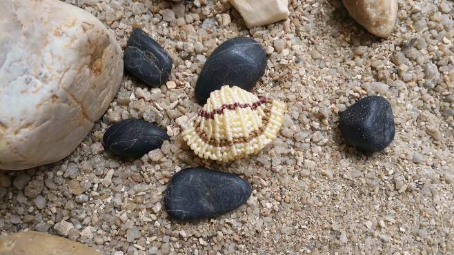 手工制作DIY教程 海洋生物系列贝壳 手工编织贝壳教程-《墨璃手工》