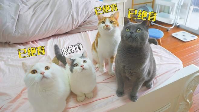 绝育后的公猫,容易被忽略的一个问题-《萌猫宝哥哥》