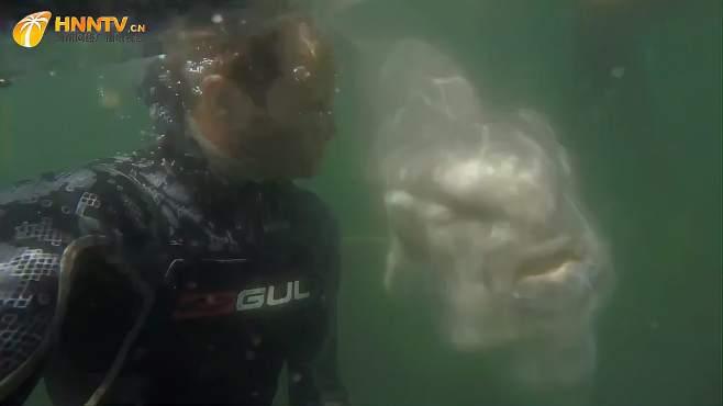 """老外海底潜水,身后竟出现一个""""人面鱼头"""",真为他捏把汗-《潮观大自然》"""